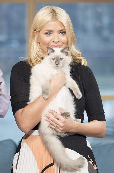 holly-willoughby-cat
