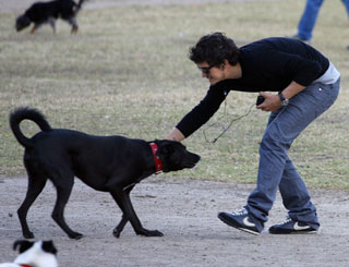 Orlando Bloom enjoys some canine capers in the park