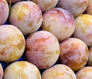 Ingredient of the week: the humble plum
