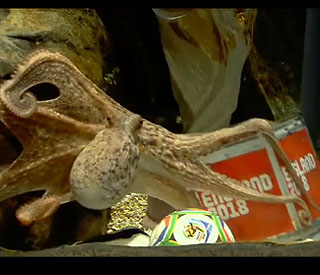 Paul the octopus backs England in 2018 bid