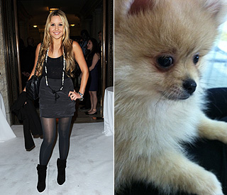 A new puppy love for Amanda Bynes