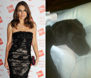 Elizabeth Hurley's dogs ill from suspected poisoning