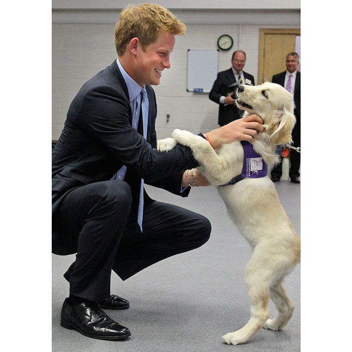 Prince Harry S Puppy Love Photos Of The Royal With Canine