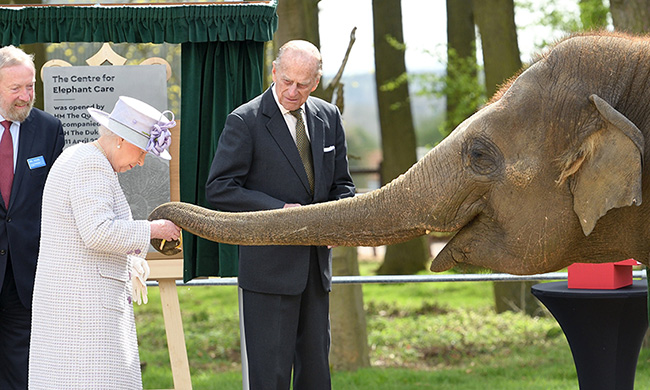 the-queen-elephant-donna