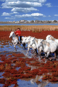 The Camargue, France