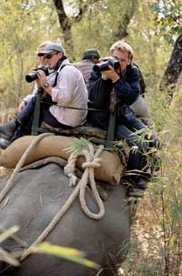 photography Kanha National Park, India