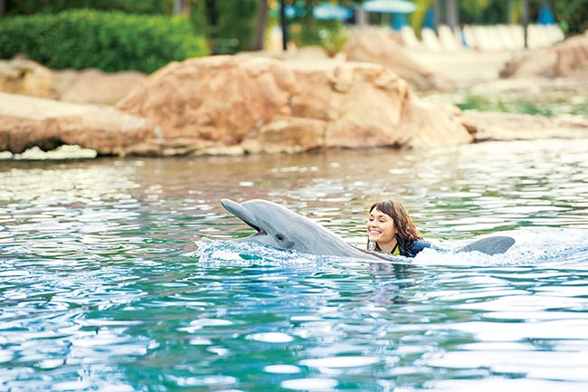 Discovery-Cove-dolphins