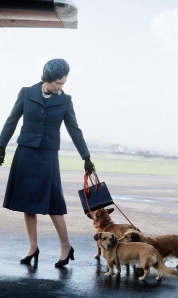 2. No jokes when Corgis apply