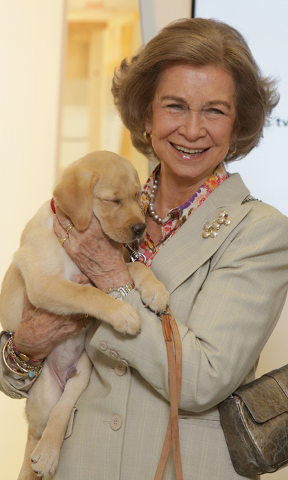 Queen Sofia of Spain cuddled up to an adorable labrador puppy at the 25th anniversary of the Foundation ONCE Guide Dog in Madrid.