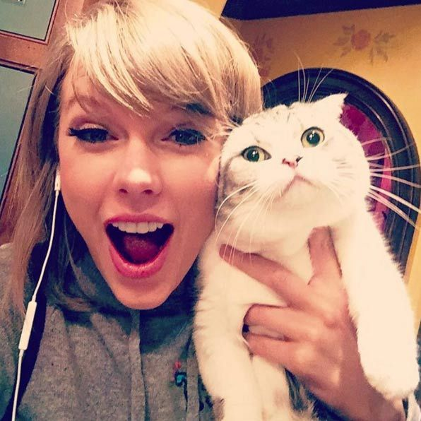 Taylor received 2.4 million likes when she shared an image from her reunion with cat Meredith Grey – the same number Kim Kardashian received for her wedding photo with Kanye West.