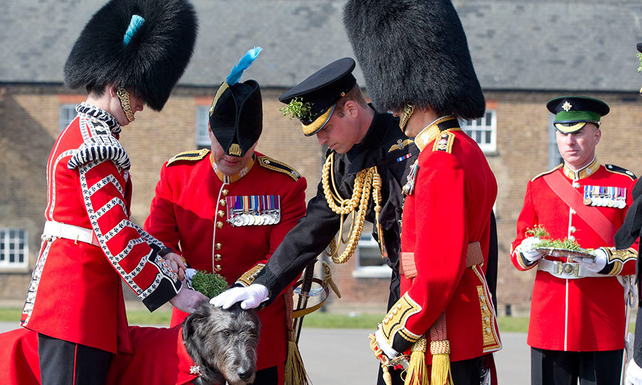 Prince William has a new furry friend! The royal met with regimental mascot, 4-year-old Irish hound Domhnall, during a St Patricks day parade in London.