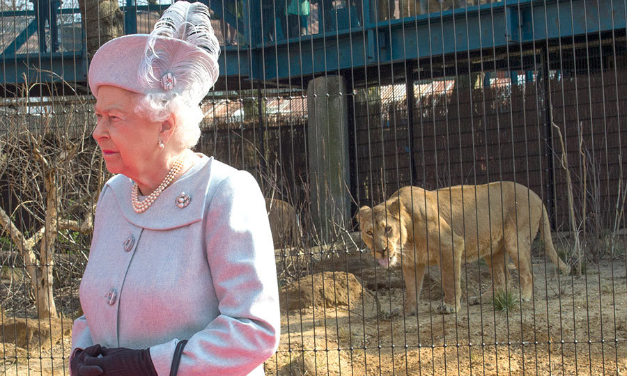 Fearless Queen Elizabeth was unfazed when she came up close and personal with lions and lionesses at the opening of 'The Land of Lions' exhibit at London Zoo.
