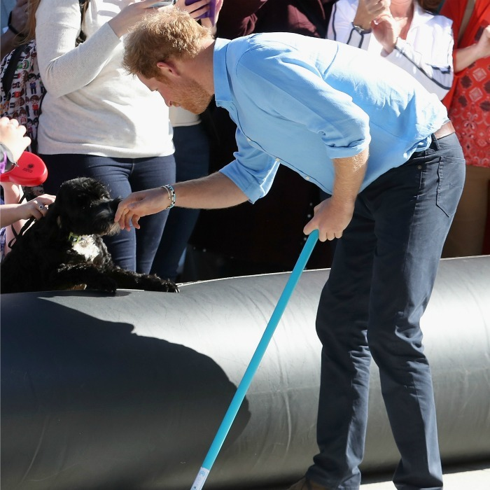Too much cute! Harry took a break from sports to pet a puppy. 