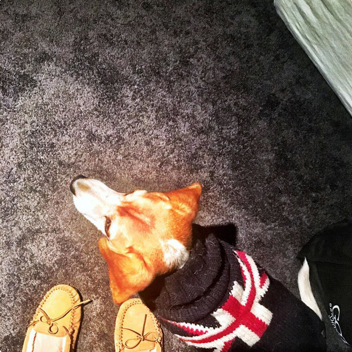 "Meghan Markle's dog is already embracing her royal beau's native country. The <i>Suits</i> actress posted a snap of her pup ""Guy"" wearing a Union Jack sweater. Attached to the post, Prince Harry's girlfriend penned, ""For the love of hand-me-downs. This was Bogart's sweater when he was a puppy, and now it's keeping Guy warm. #puppylove  #adoptdontshop #reducereuserecycle.""
