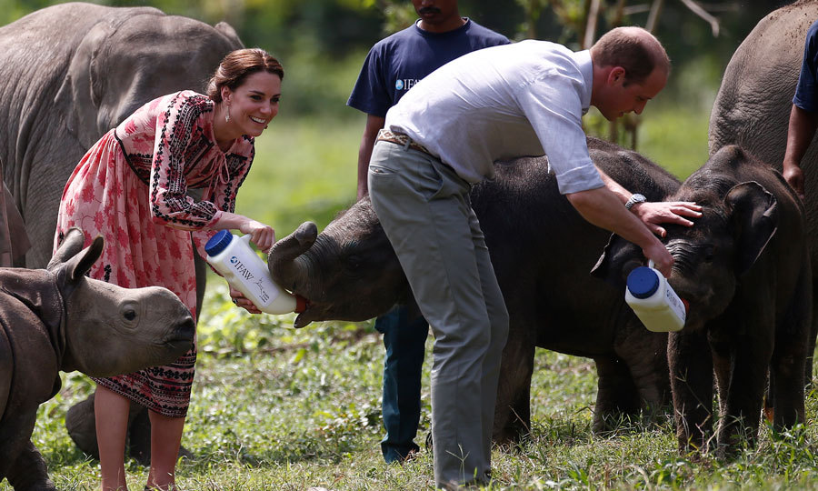 The royals couldn't escape feeding time even with their kids back in the UK! Kate and Will fed baby elephants at the Centre for Wildlife Rehabilitation and Conservation in India.