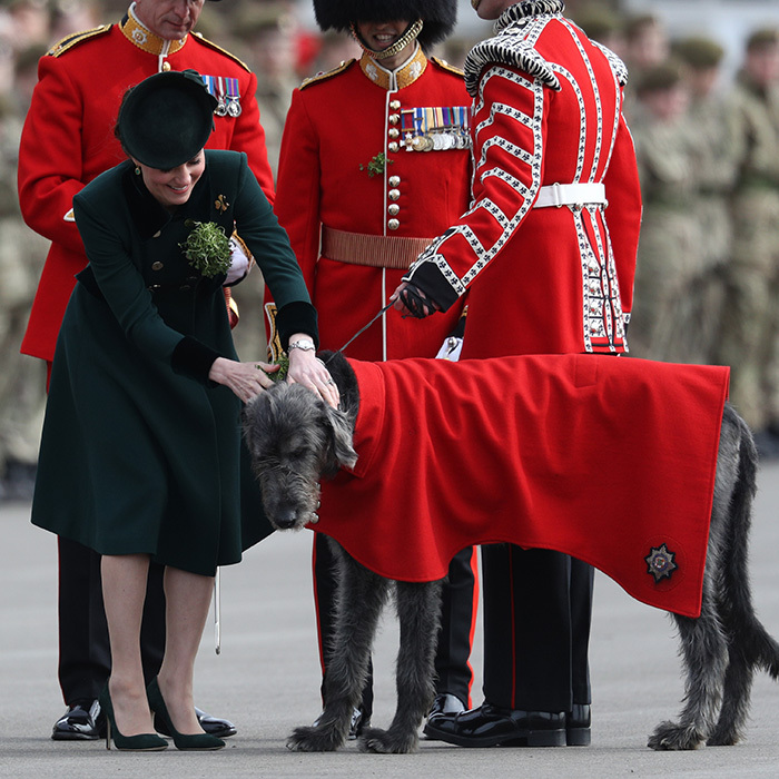 Duchess Kate smiled as she gave a shamrock to the Regimental mascot, an Irish hound.