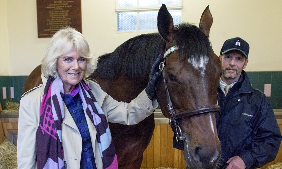 Camilla, Duchess of Cornwall, Honorary Member of the Jockey Club, met a horse named Frankel at Banstead Manor Stud on March 22 in Newmarket, United Kingdom. 