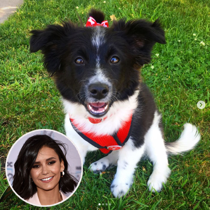 Meet Maverick Do(g)brev! Nina introduced her new adopted pup with her own Instagram @Mrs.Maverick. The former <i>Vampire Diaries</i> actress brought her half Border Collie half Aussie Shepherd from The Pet Care Foundation in L.A. 
