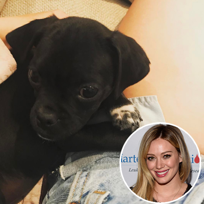 Hilary Duff shared a photo of her newly adopted puppy from Love Leo Rescue via Instagram. The <i>Younger</i> actress first named him Momo but then wasn't sure that was the right fit for the Labrador mix.