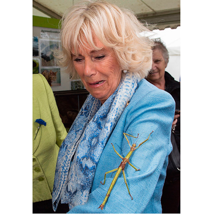 Don't move, Duchess Camilla! The British royal reacted just like we would have as she met a giant stick insect at the South of England Showground in Ardingly.