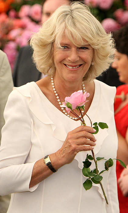 To mark Camilla joining the royal family, a new rose was named the Duchess of Cornwall in 2005.