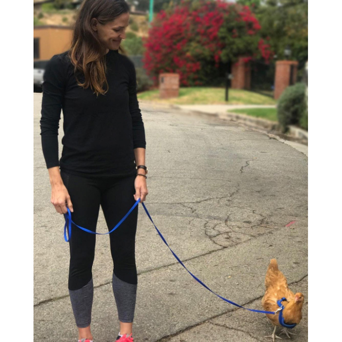 "Just two chicks strolling along! Jennifer Garner introduced her Instagram followers to her pet chicken, who happens to be named after a <i>Mean Girls</i> character. Alongside the picture of herself walking the chicken on a leash, the mom-of-three penned, ""If there isn't a Chicken Lady Day , there really should be. Man, my life gets more exciting all the time."" She added, ""Meet one of our ladies, Regina George. Regina loves long walks, dehydrated bugs, and kale. Regina hates....carbs. #shesanicechickenbutaMeanGirl #MeanGirlsthemovie #ithinkshehasaburnbook #cluckcluck.""