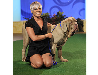 Pink helps pooch find a new home on chat show