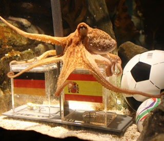 Psychic octopus selects Spain as World Cup champs