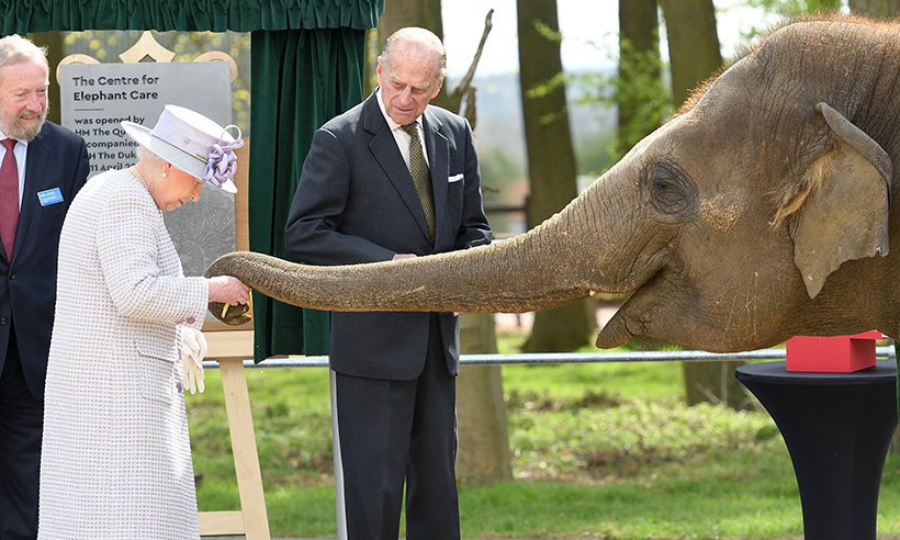 the-queen-elephant