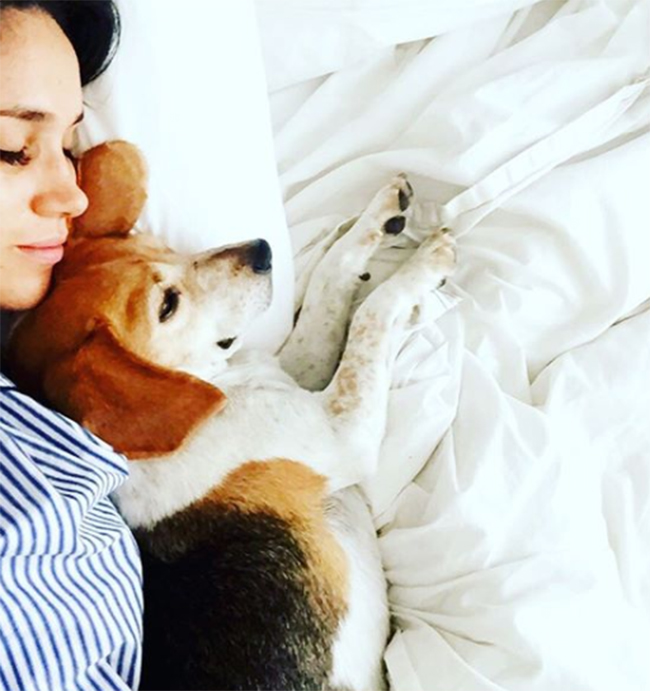 meghan-markle-and-her-dog-on-instagram