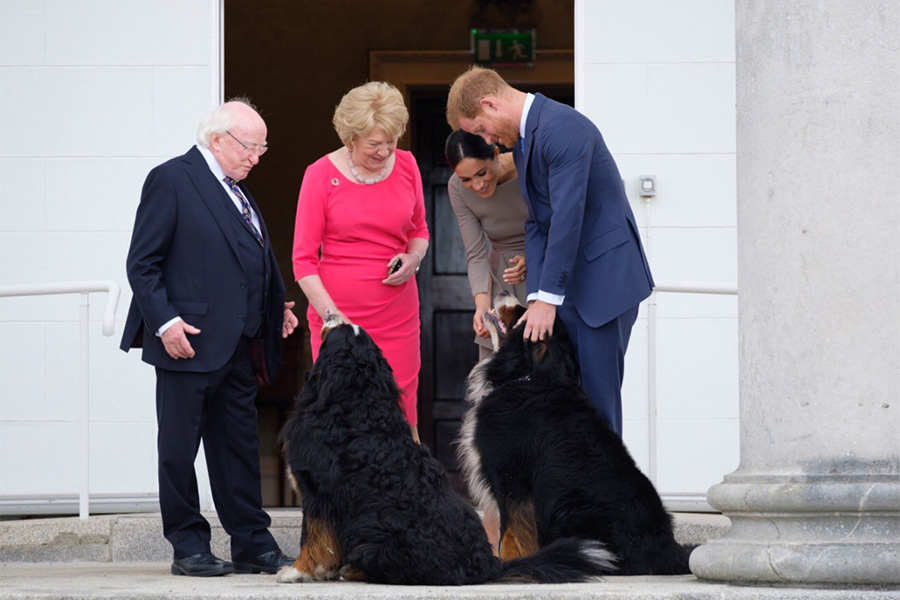 Prince Harry and Meghan with Ireland's first dogs