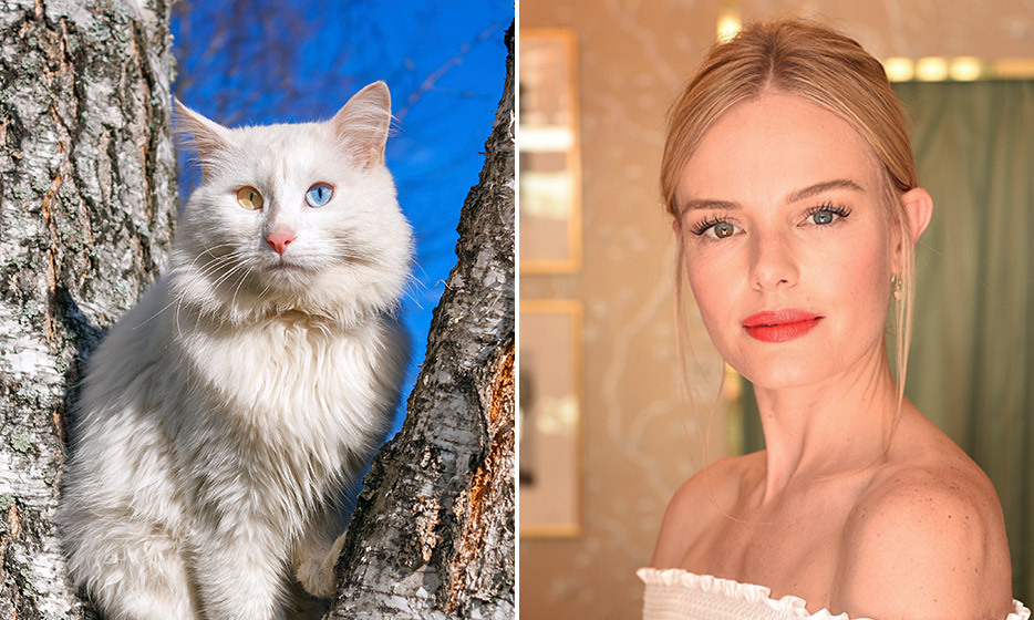 Celebrities And Their Cat Soulmates Hello Canada
