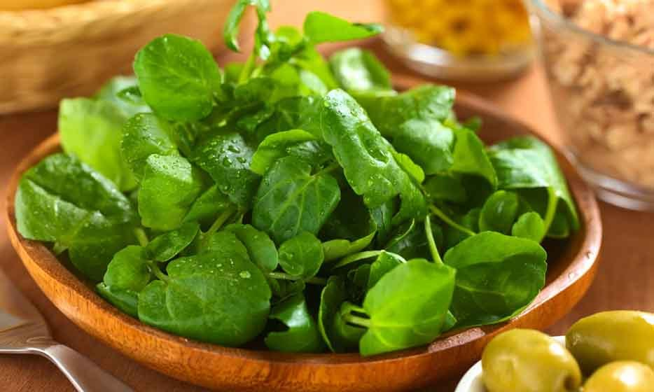 <b>Watercress </B>