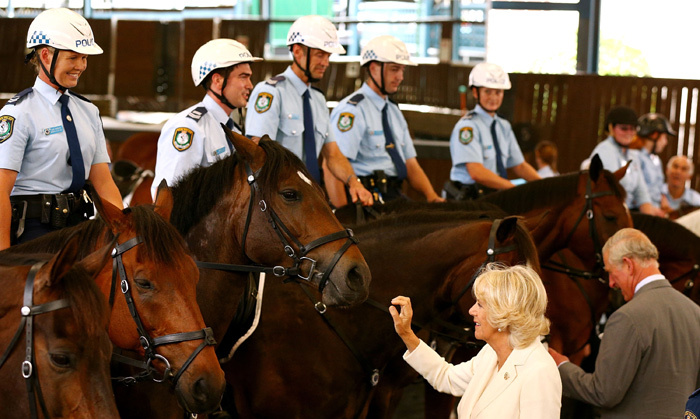 Horse lovers Charles and Camilla really enjoyed chatting to the NSW Mounted Police Unit on the third day of their Australia jaunt. <br>