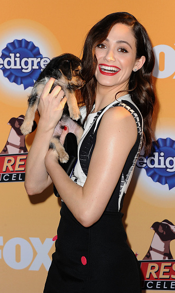 November 21: Say hello to her little friend! Actress Emmy Rossum made a furry pal at FOX's All-Star Dog Rescue Celebration in Santa Monica.