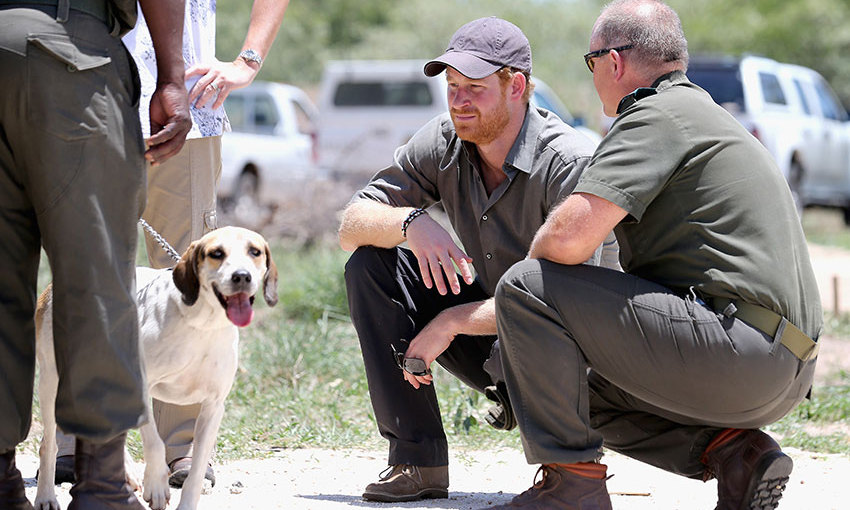 Harry got to meet a Ranger Tracker dog during his visit ot the South African Wildlife College in Hoedspruit, South Africa.