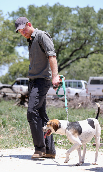 Harry made a furry friend! The prince took a Ranger Tracker dog for a walk while visiting the South African Wildlife College.