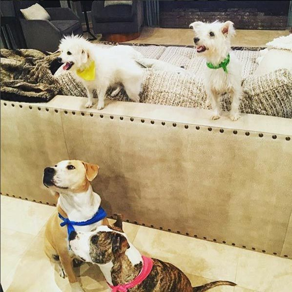 Kaley Cuoco has adopted a number of dogs, which can be seen regularly on social media.