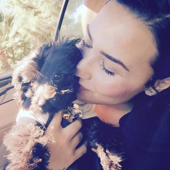 Following the sad death of her pet dog Buddy, Demi Lovato has since bought another puppy called Batman, who she frequently shares pictures of on Instagram.