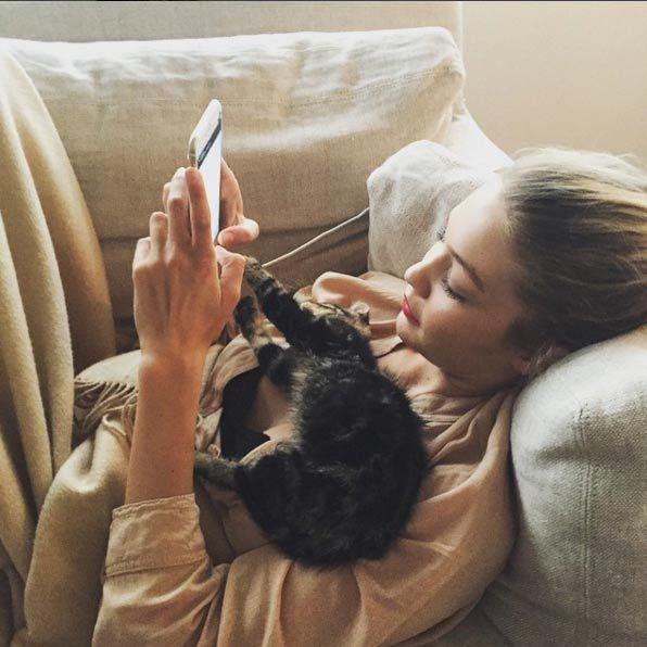 Gigi Hadid set up a personal Instagram profile for her cat Cleo earlier in the year, with the popular kitten clocking up over 12,000 followers.