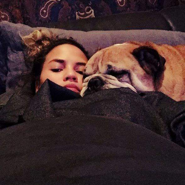 Chrissy Teigen and her husband John Legend have a family of dogs including bulldogs Pippa and Putty, who tied the knot in an amusing video to raise money for charity in March 2014.