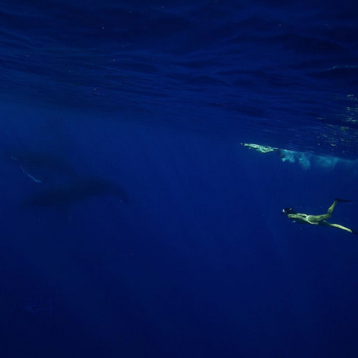 "Nina Dobrev is spending some time in the deep blue sea. While vacationing in Maui with her pal Jessica Szohr, the actress made another friend. She said, ""That's me swimming with my  friends. 