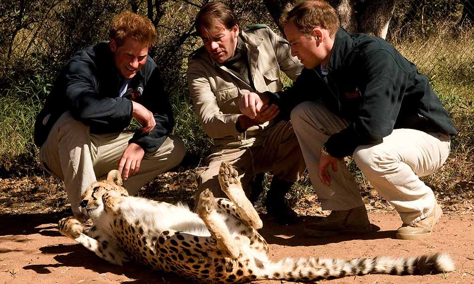 William and Harry had some fun petting a cheetah while visiting the  Mokolodi Education Centre in Gaborone, Botswana.