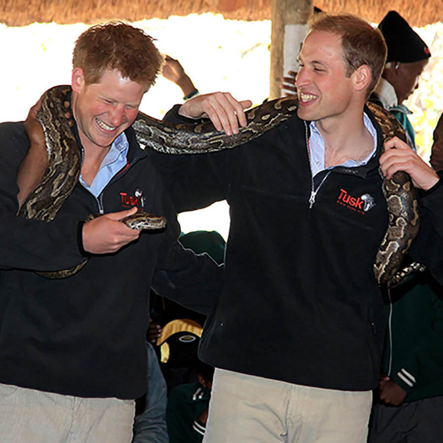 The royal brothers proved that they were a fearless duo when they held on to an African rock python in Botswana.