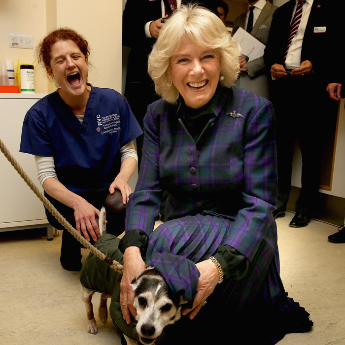 Awwww! The Duchess of Cornwall made a new friend when she visited the Queen Mother Hospital for Small Animals to celebrate its 30th anniversary.