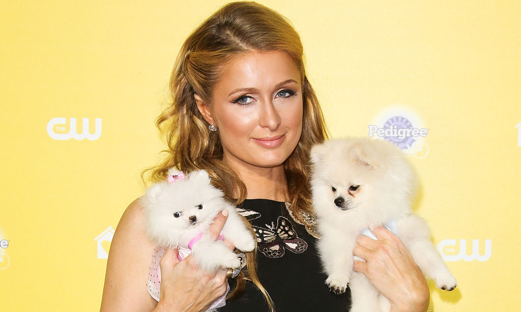 Princess Margaret Style >> Paris Hilton's incredible dog mansion has to be seen to be believed