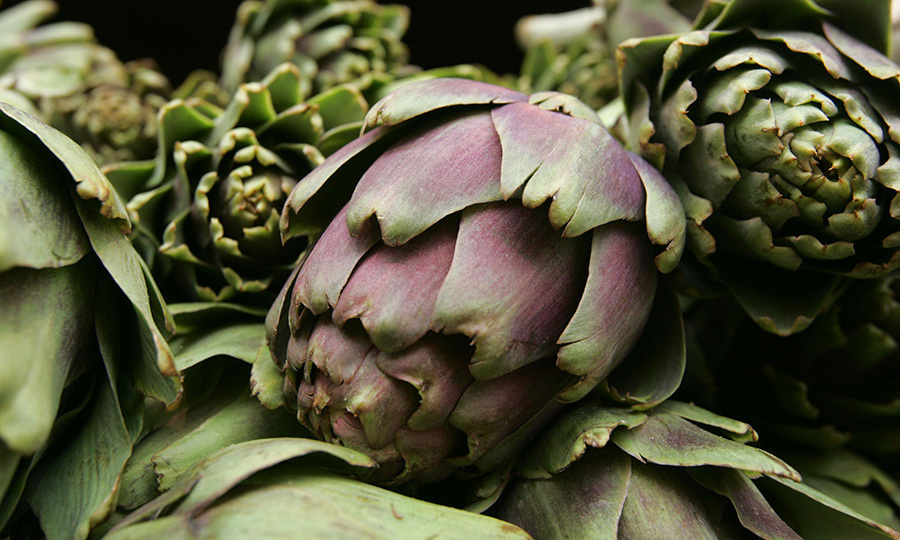 <b>Artichoke</B>