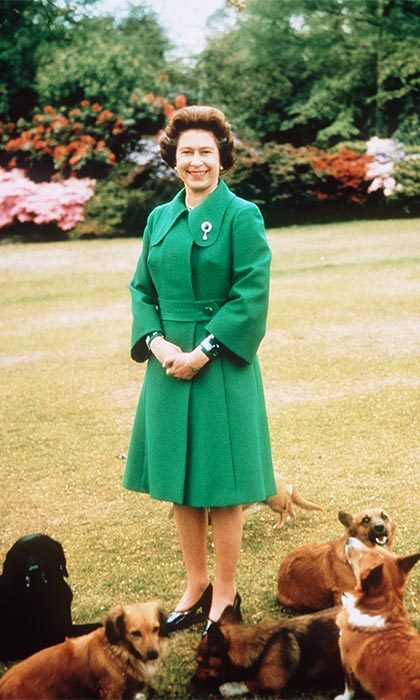 Dogs have a special place at the estate. From the Labradors that the Queen breeds here to the memorials for the past royal pets.