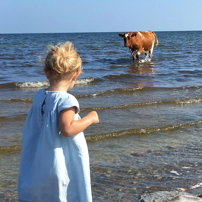 "Holy cow! Leonore had a surprising encounter on a beach on the Swedish island of Öland‬ during a summer getaway with her family. Princess Madeleine of Sweden posted the photo of her daughter admiring a cow wading in the waters writing, ""unexpected visitor."" 