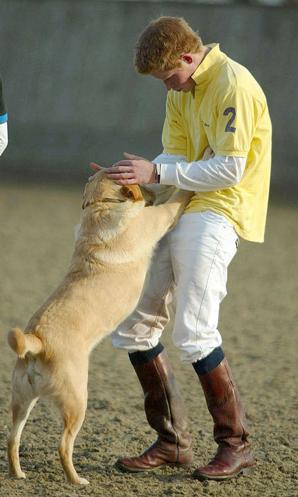 It was playtime for the British royal and his new furry pal, after taking part in a polo match in aid of the victims of the Indian Earthquake Tsunami in 2005.